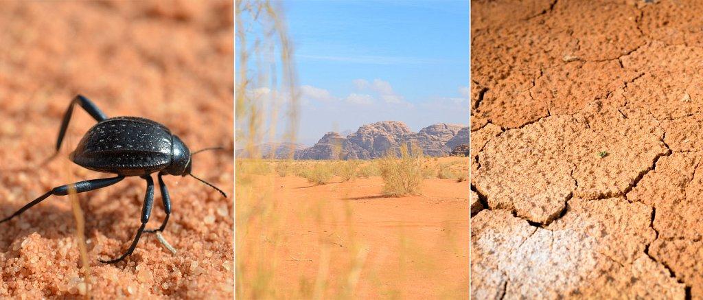 wadi-rum-tour.jpg